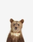Baby Bär